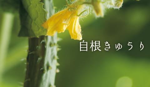 image_cucumber.jpg