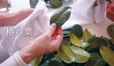 image_tsubakinoha.jpg