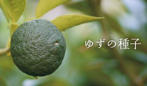 image_yuzu.jpg